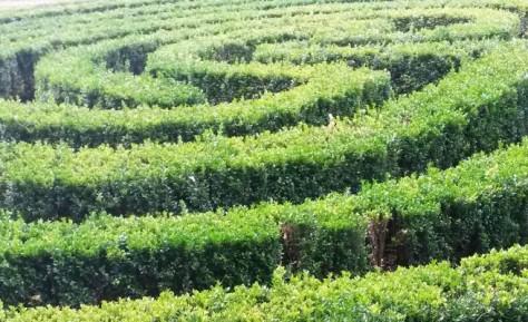 Einweihung des Labyrinthes auf dem Christenberg